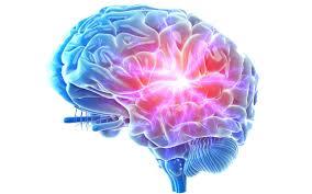 ساختار مغزی